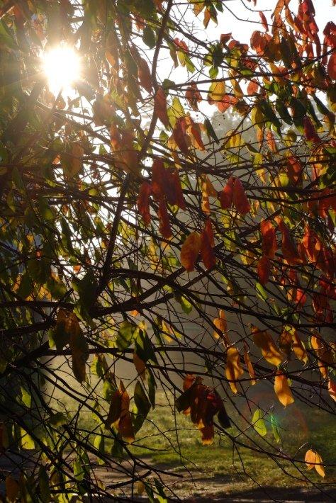 В Полевской пришли осенние туманы (фото) - фото 1