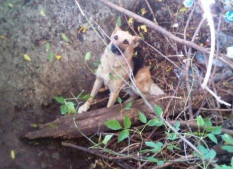 В Черниговской области пожарные спасли жизнь собаке (фото) - фото 1