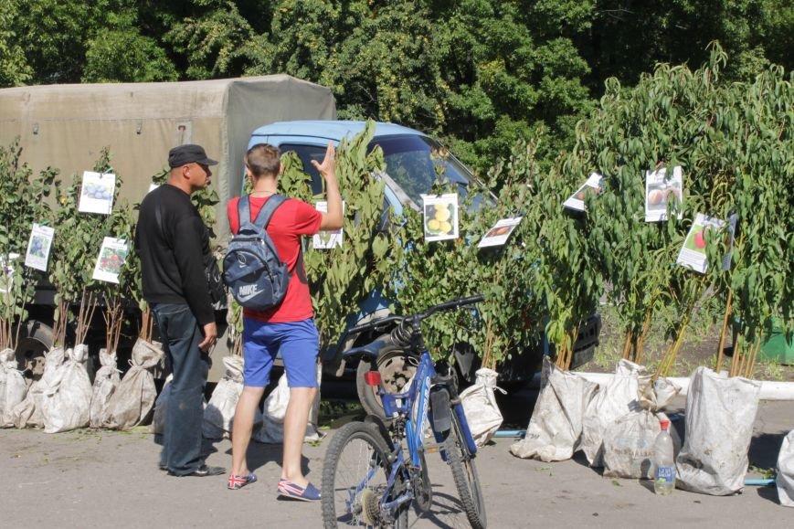 В Доброполье проходит ярмарка саженцев, фото-3
