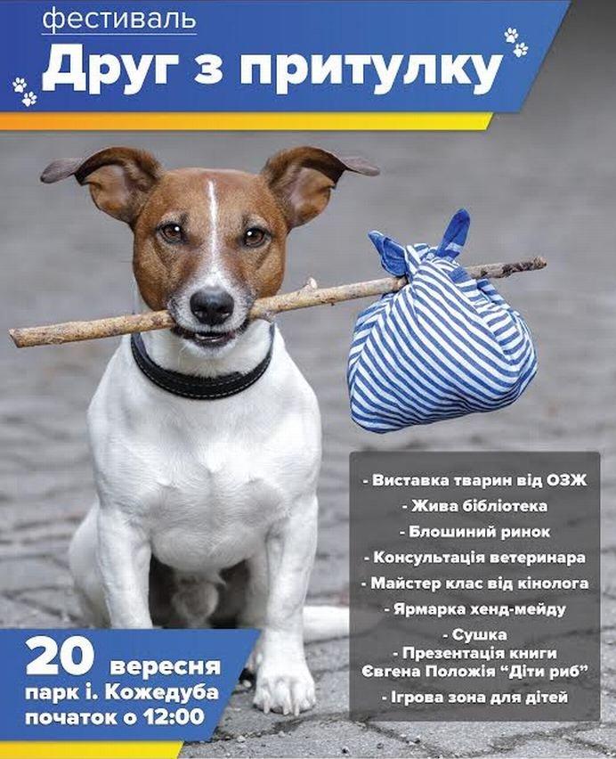В Сумах впервые состоится выставка собак из приюта (фото) - фото 1
