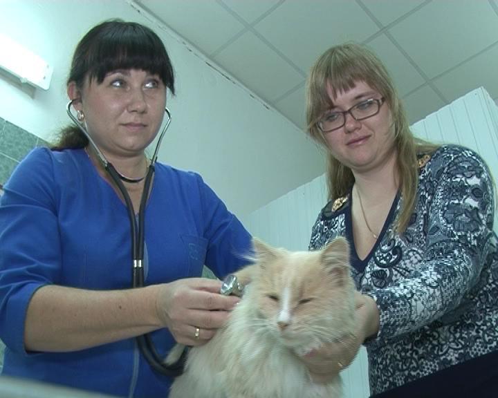 Армавирские ветеринары проводят бесплатную вакцинацию от бешенства (фото) - фото 1