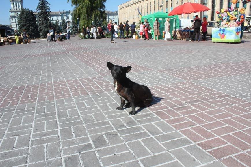 В Днепродзержинске открылась ярмарка «Золотая осень» (фото) - фото 20