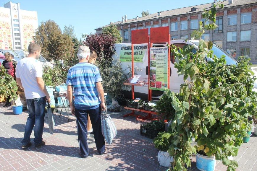 В Днепродзержинске открылась ярмарка «Золотая осень», фото-2