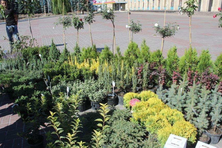 В Днепродзержинске открылась ярмарка «Золотая осень» (фото) - фото 11