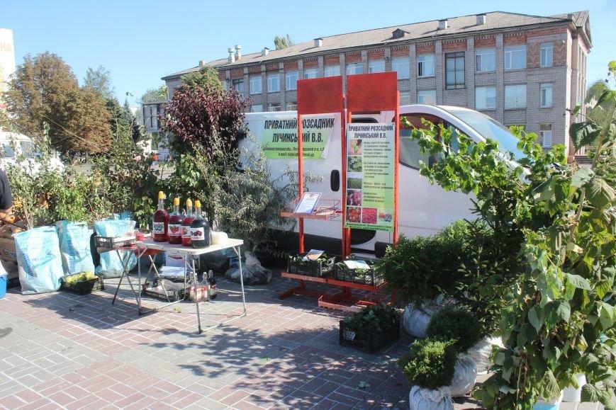 В Днепродзержинске открылась ярмарка «Золотая осень» (фото) - фото 12