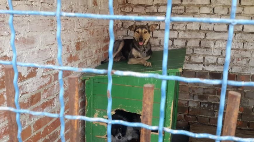У ЛКП «ЛЕВ» показали нові інструменти для відлову безпритульних собак (ФОТО) (фото) - фото 1