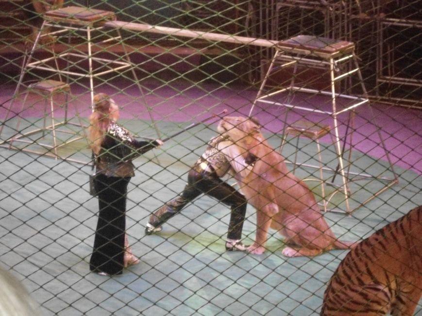 У Львівському цирку відбулась прем'єра міжнародної програми «Сузір'я цирків світу» (ФОТО) (фото) - фото 16