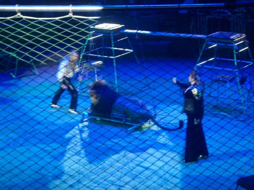 У Львівському цирку відбулась прем'єра міжнародної програми «Сузір'я цирків світу» (ФОТО) (фото) - фото 13