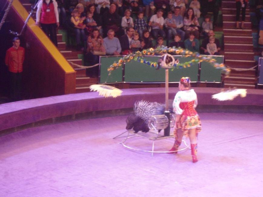 У Львівському цирку відбулась прем'єра міжнародної програми «Сузір'я цирків світу» (ФОТО) (фото) - фото 4