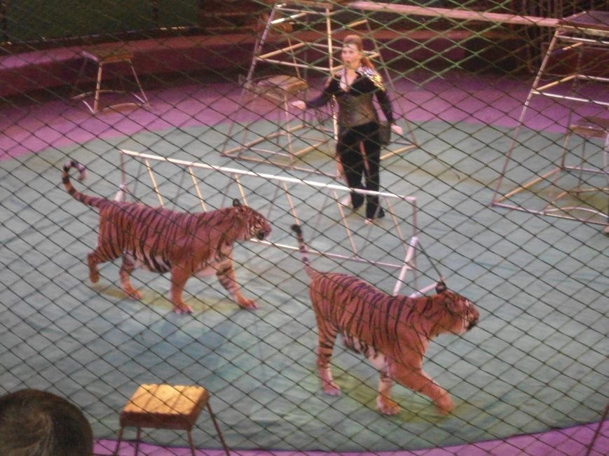 У Львівському цирку відбулась прем'єра міжнародної програми «Сузір'я цирків світу» (ФОТО) (фото) - фото 15