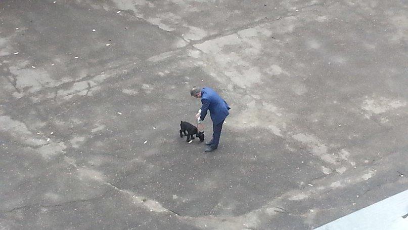 Тернополян вразив чоловік, який прибрав за своїм собакою на вулиці (фото) (фото) - фото 1