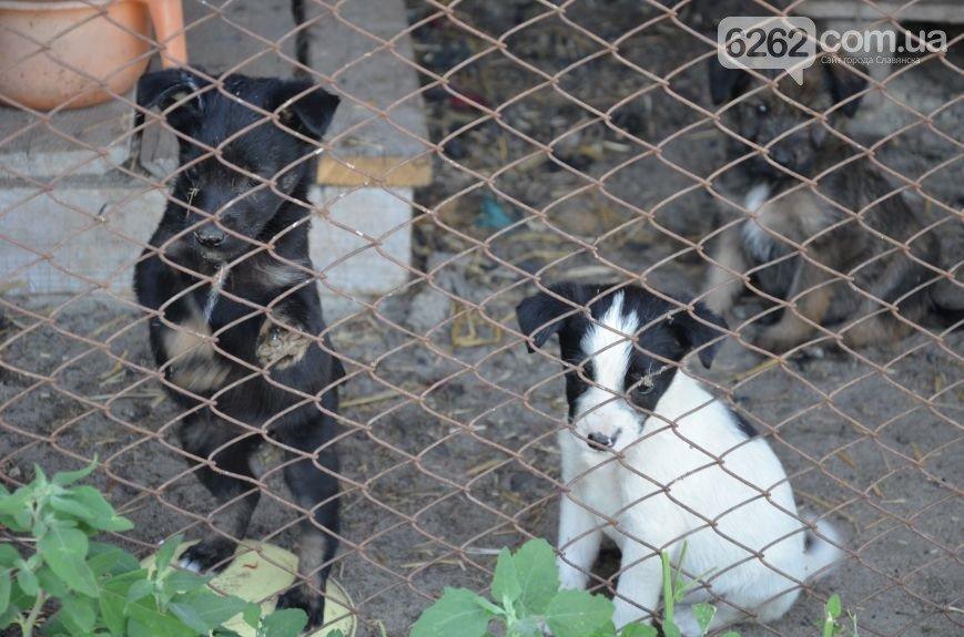 Славянское КАТП просит помощи для беспризорных животных (фото) - фото 1