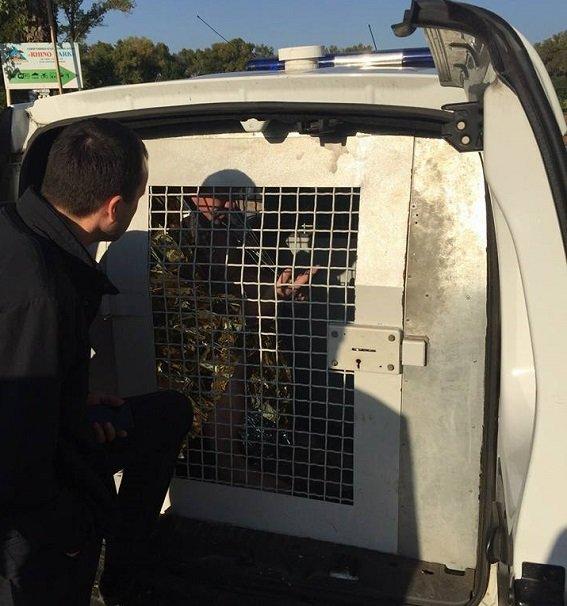 В киевском парке мужчина угрожал взорвать гранату (ФОТО) (фото) - фото 2