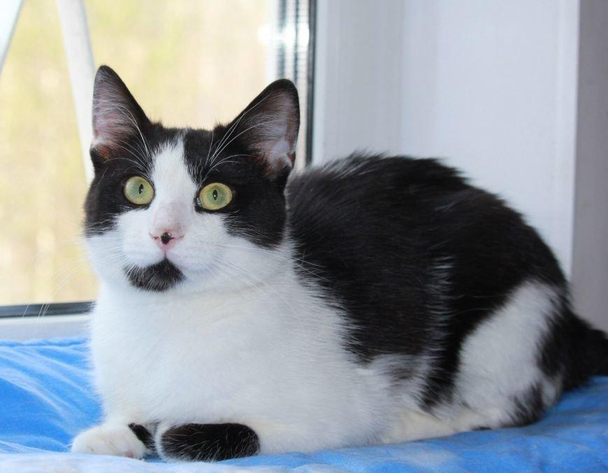 Истории со счастливым концом про несчастных кошек (фото) - фото 1