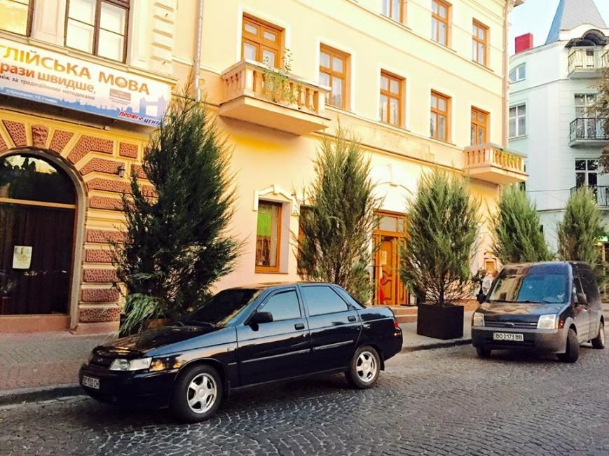 В центрі Тернополя з'явились великі туї в дерев'яних горшках (фото) (фото) - фото 1