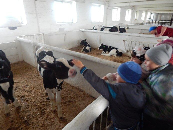 Юным полевчанам показали, откуда берется молоко (фото) - фото 1