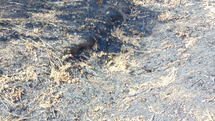 Гидрометцентр предупредил, что в Мариуполе ожидается пожарная опасность пятого класса (ФОТО) (фото) - фото 1