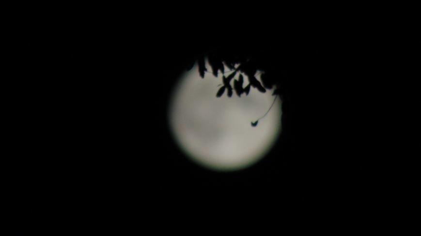 Над Мариуполем проявилось уникальное космическое явление (ФОТОФАКТ) (фото) - фото 5