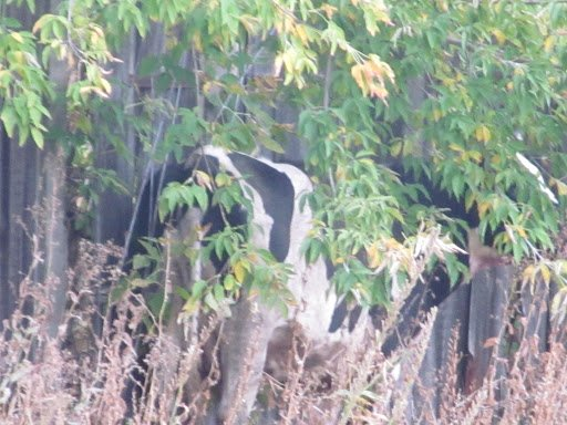На Сумщине на беременную женщину напала корова (ФОТО), фото-2
