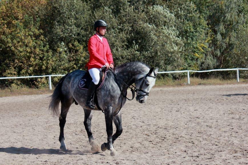 В Белгороде разыграли Кубок губернатора по конному спорту (фото) - фото 1