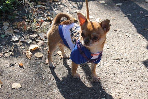 В Краматорске прошла выставка собак всех пород (фото) - фото 2