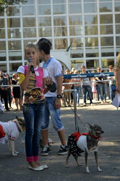 В Краматорске прошла выставка собак всех пород (фото) - фото 6