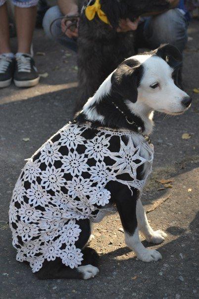 В Краматорске прошла выставка собак всех пород (фото) - фото 8