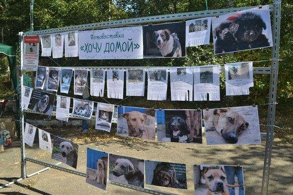 В Краматорске прошла выставка собак всех пород (фото) - фото 3