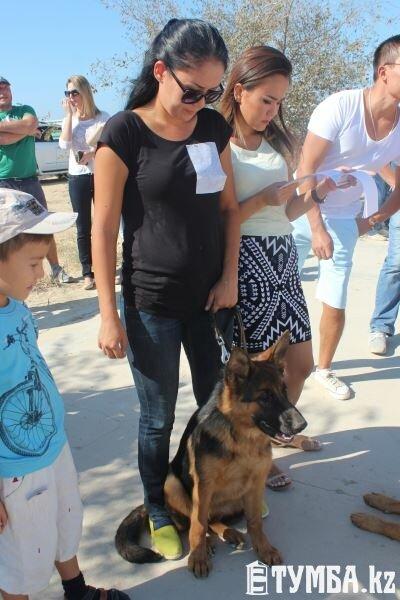 Выставка собак прошла в Актау (фото) (фото) - фото 4