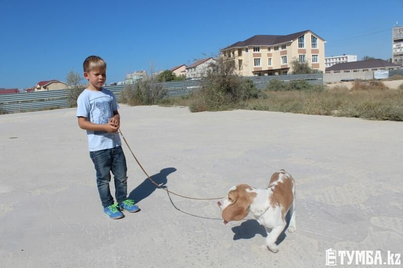 Выставка собак прошла в Актау (фото) (фото) - фото 13