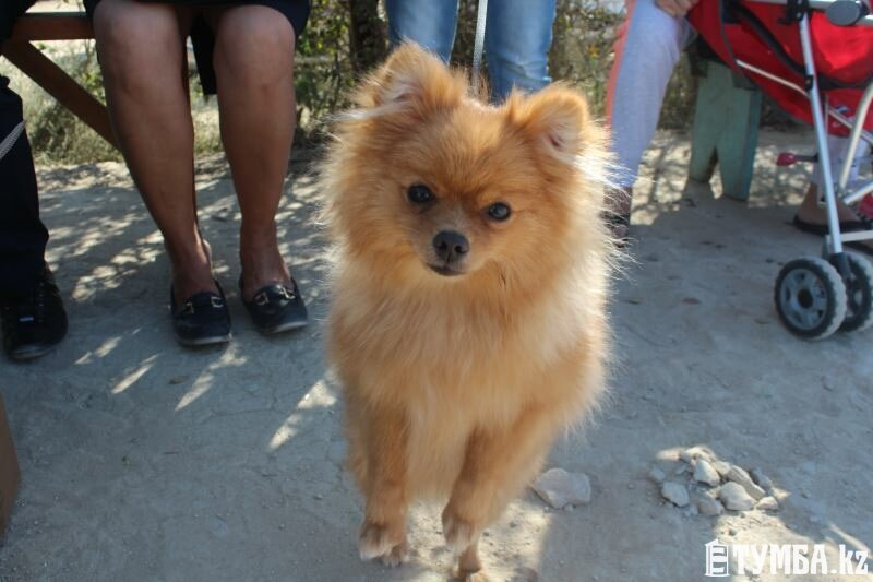 Выставка собак прошла в Актау (фото) (фото) - фото 7
