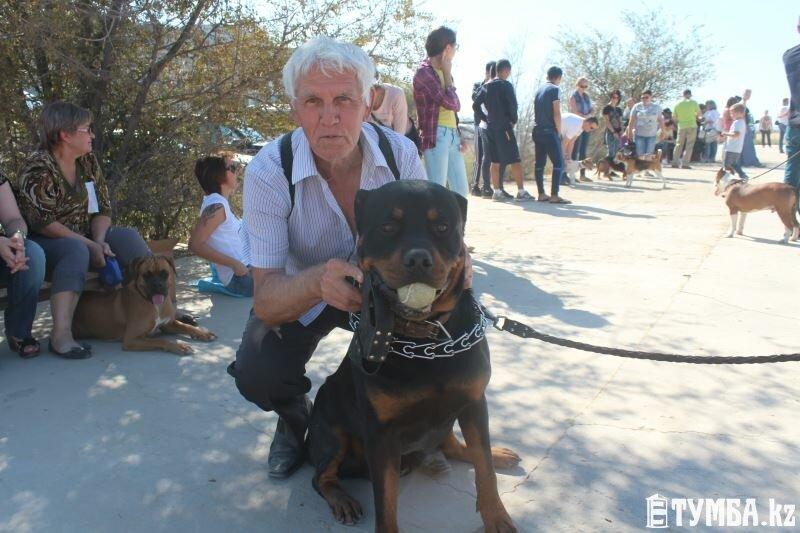 Выставка собак прошла в Актау (фото) (фото) - фото 2
