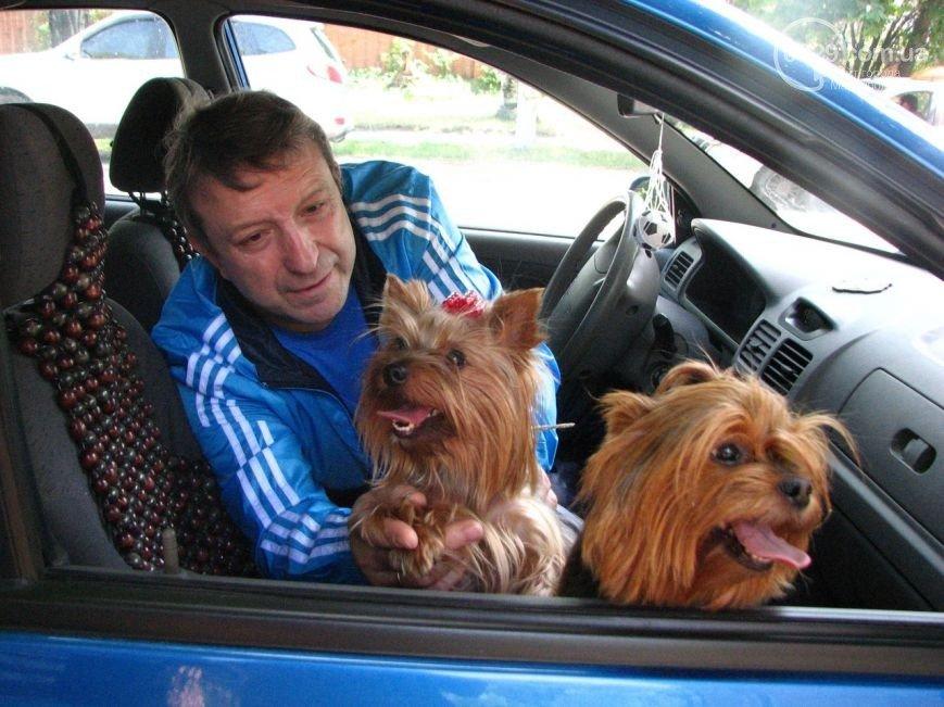 В Мариуполе найдены похищенные собаки. Пенсионерам пришлось их выкупать (фото) - фото 1