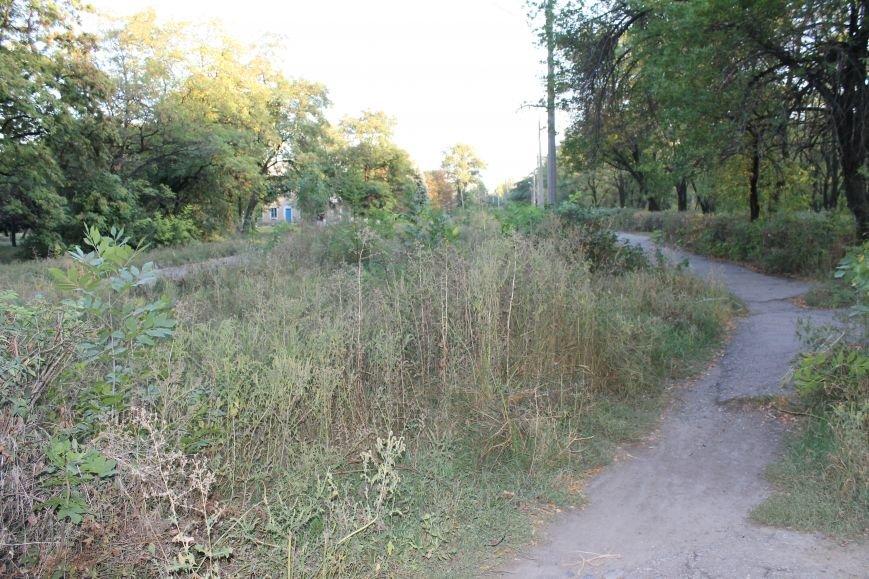 В городе Белицкое два парка?(ФОТО), фото-16