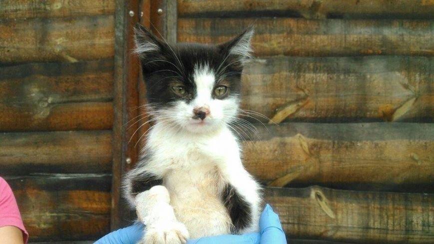 Котят, которых нашли под Киевом, раздают всем желающим (ФОТО) (фото) - фото 3