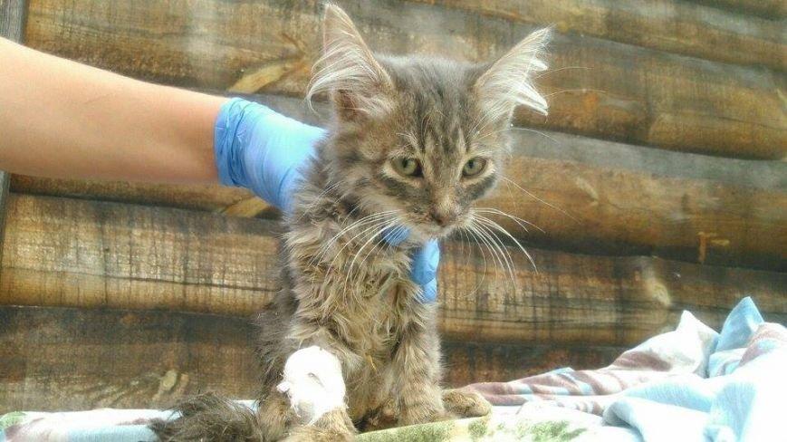 Котят, которых нашли под Киевом, раздают всем желающим (ФОТО) (фото) - фото 5