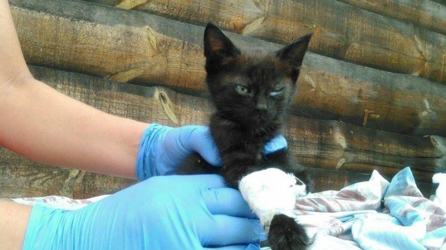 Котят, которых нашли под Киевом, раздают всем желающим (ФОТО) (фото) - фото 2