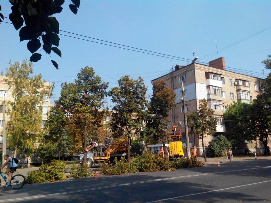 В Кривом Роге с начала года убрали 1381 дерево и посадили 770 (ФОТО) (фото) - фото 1