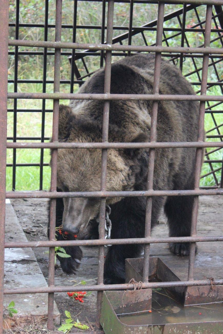Сыктывкарские школьники увидели медведя в метре от себя, фото-3