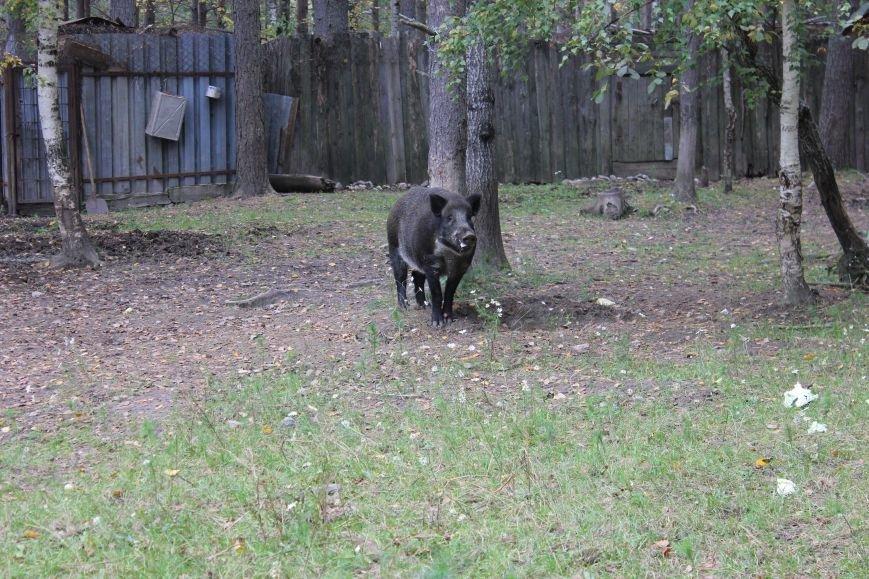 Сыктывкарские школьники увидели медведя в метре от себя, фото-2