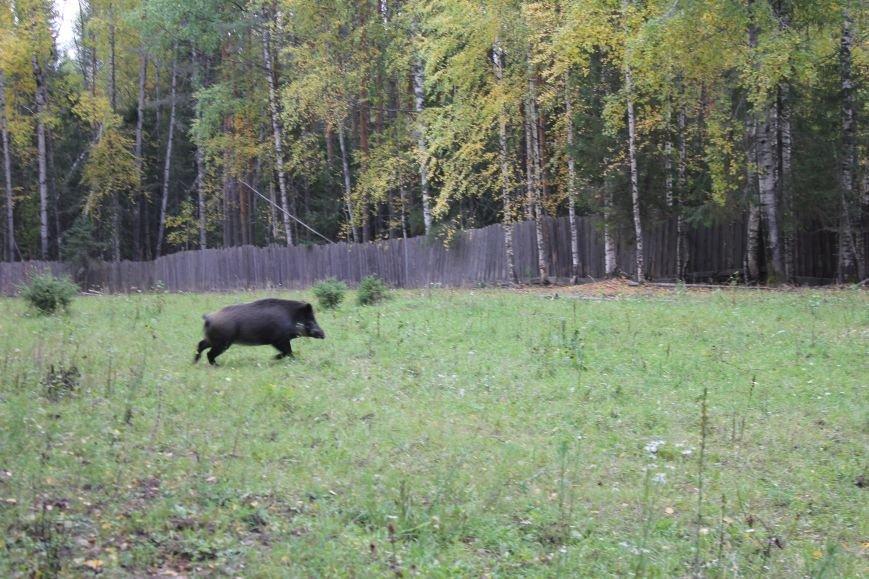 Сыктывкарские школьники увидели медведя в метре от себя, фото-1
