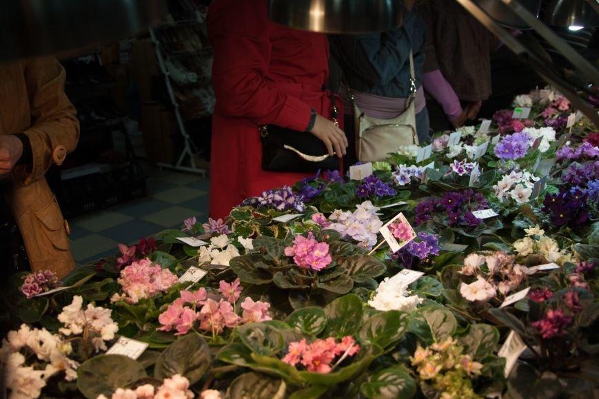 В Одессе вместе собрались растения-хищники и фиалки (ФОТО) (фото) - фото 3