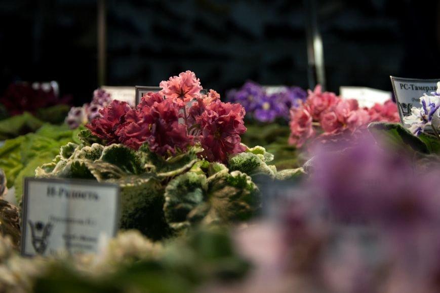 В Одессе вместе собрались растения-хищники и фиалки (ФОТО) (фото) - фото 1