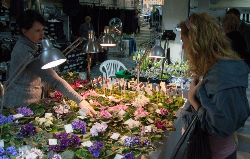 В Одессе вместе собрались растения-хищники и фиалки (ФОТО) (фото) - фото 2