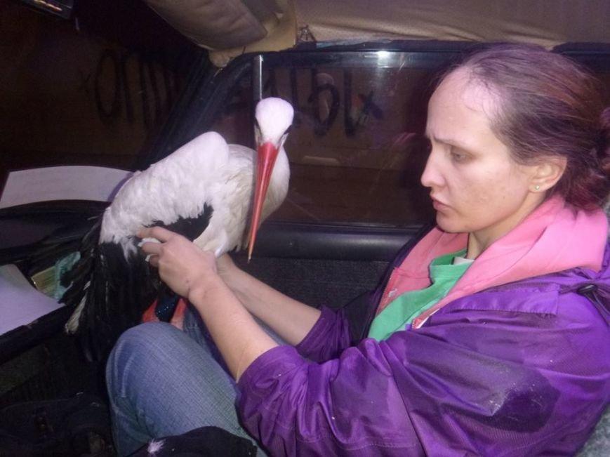 Зооспасатели отправили аиста с Майдана в приют (ФОТО), фото-3