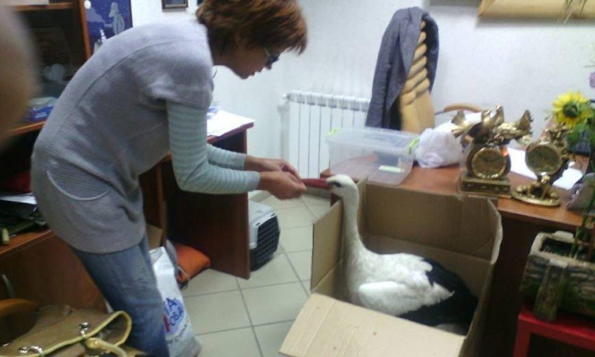 Под Киевом функционирует реабилитационный центр для птиц (ФОТОФАКТ), фото-9