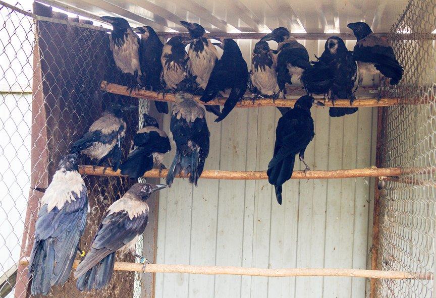 Под Киевом функционирует реабилитационный центр для птиц (ФОТОФАКТ), фото-4