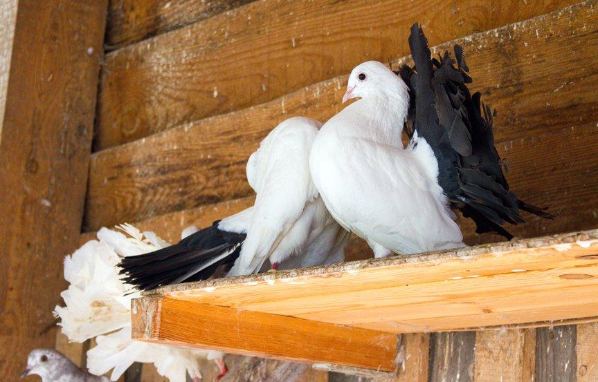 Под Киевом функционирует реабилитационный центр для птиц (ФОТОФАКТ), фото-5