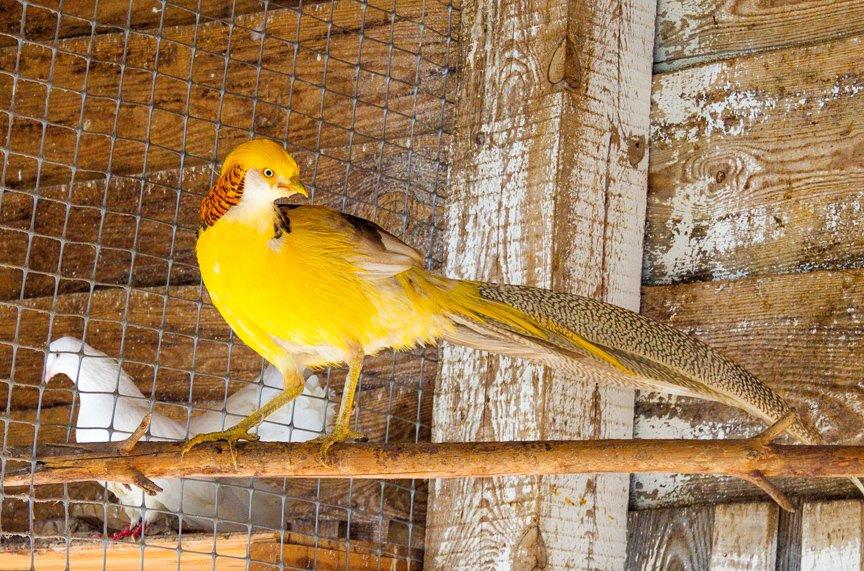 Под Киевом функционирует реабилитационный центр для птиц (ФОТОФАКТ), фото-7