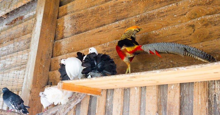 Под Киевом функционирует реабилитационный центр для птиц (ФОТОФАКТ), фото-6